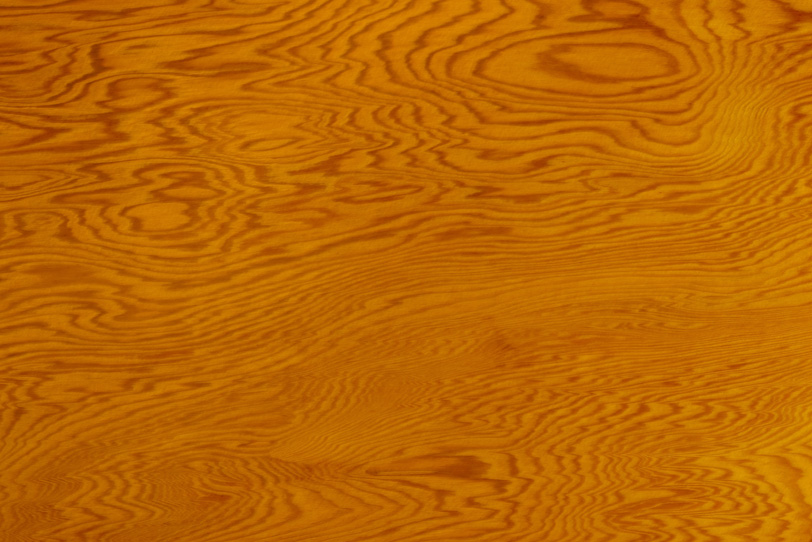縞模様が美しい老松の木目の写真画像