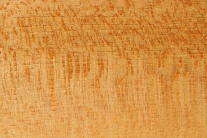 自然の木のテクスチャの写真画像