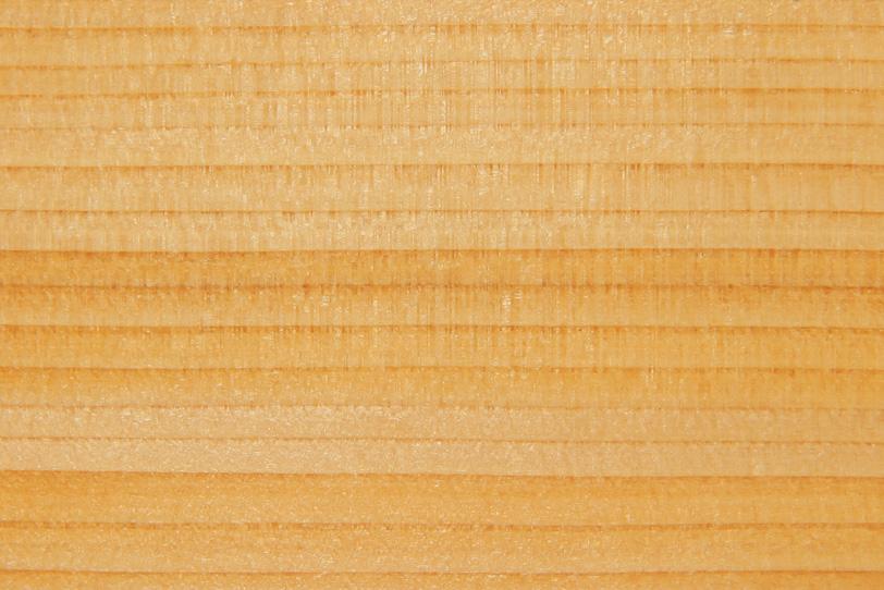 新しい木の綺麗な木目の写真画像