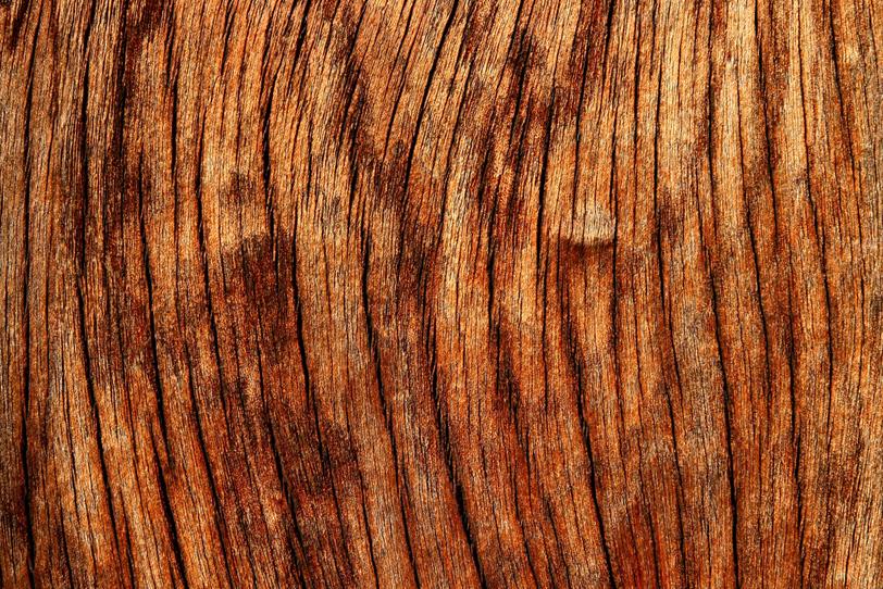 荒々しい木の質感の写真画像