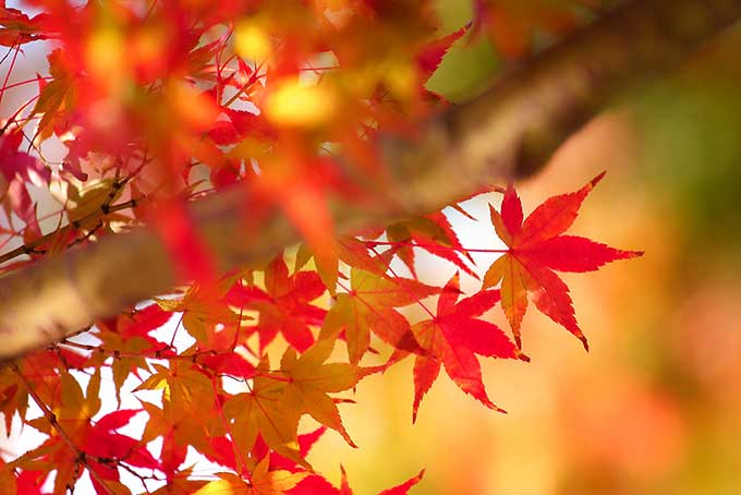 色彩豊かな木々が織りなす秋の森の写真