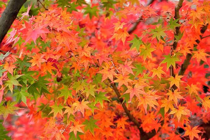 「もみじ 素材」赤く染まるもみじの写真、色絵錦のようなモミジの背景、秋空と綺麗な紅葉の画像など、高画質&高解像度の画像・写真素材を無料でダウンロード