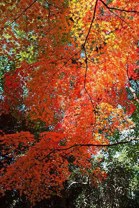 緑の背景に紅葉が垂さがる