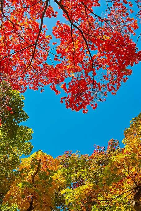 空と赤黄緑のモミジの葉