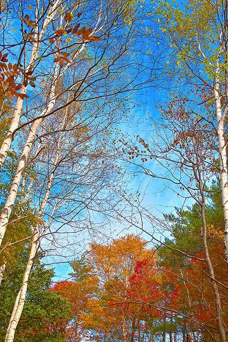 清々しい青空と秋の森のテクスチャ