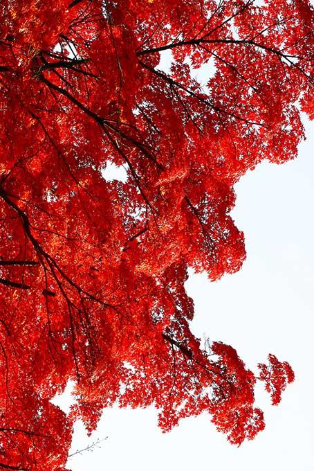 白背景に浮かぶ鮮やかな赤