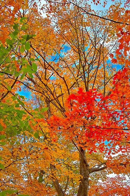 紅葉 風景(紅葉 秋のフリー画像)