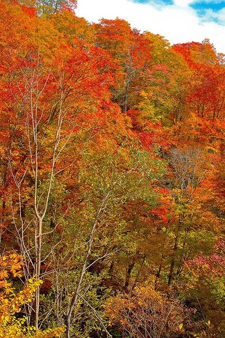 紅葉 風景の背景