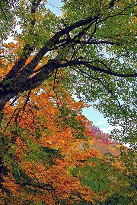 紅葉 風景