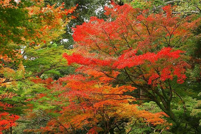 「紅葉 素材」赤く染まる紅葉の写真、色絵錦のような紅葉の背景、秋空と綺麗な紅葉の画像など、高画質&高解像度の画像・写真素材を無料でダウンロード