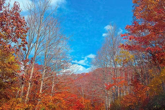 紅葉する森と山(紅葉 空のフリー画像)