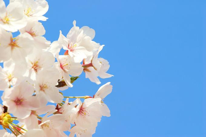 澄み切った空と桜