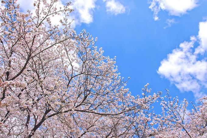 桜と雲のフレーム(桜 雲の画像)