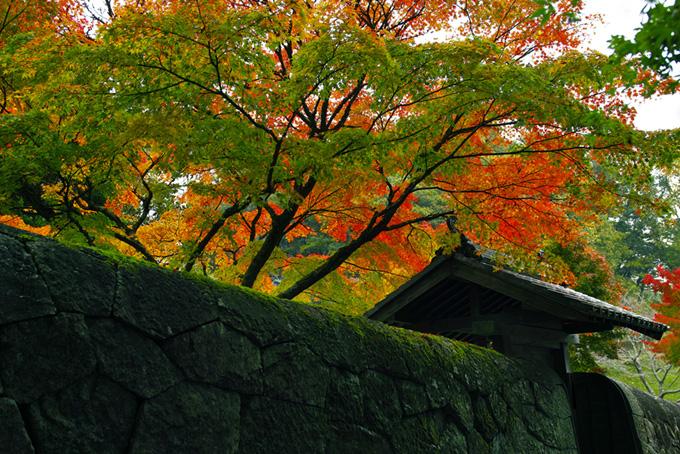 春夏秋冬の和風の写真、松や竹の和風の背景、日本の季節を彩る和風の画像など、高画質&高解像度の画像素材を無料でダウンロード