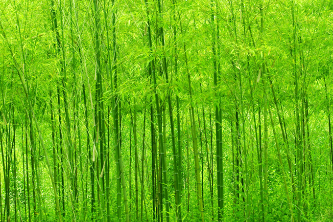鮮やかな緑の竹の背景のテクスチャ