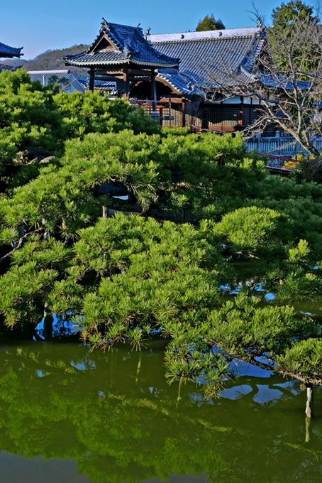 池と松と日本寺院のテクスチャ