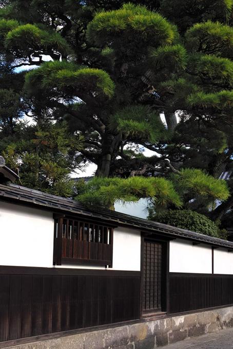 大きな松のある白壁の屋敷