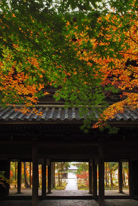和風 季節の画像(紅葉 日本のフリー画像)