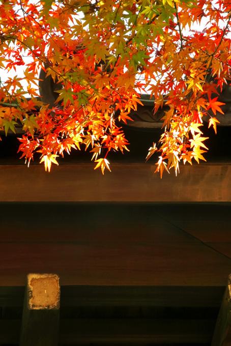 和風 季節(紅葉 日本のフリー画像)