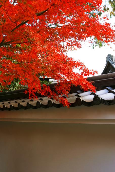 日本のイメージ背景(紅葉 日本のフリー画像)