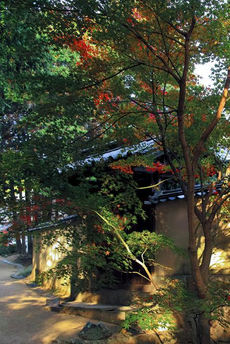 日本のイメージ(紅葉 日本のフリー画像)