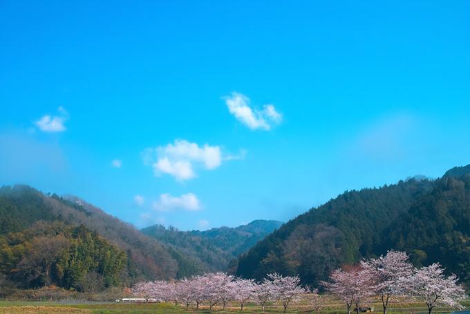 山あいの風情ある桜並木