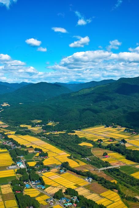 黄色い田んぼと集落