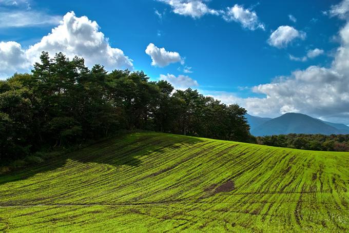 緑の丘と林の景色