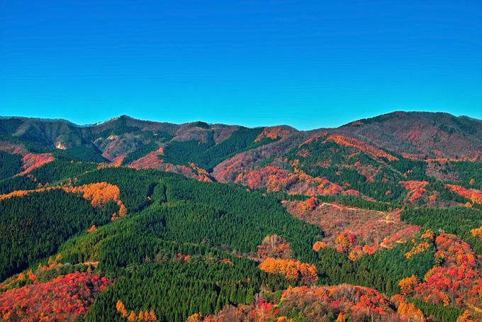 緑と赤のコントラストが美しい山腹の景色(山 フリーの画像)