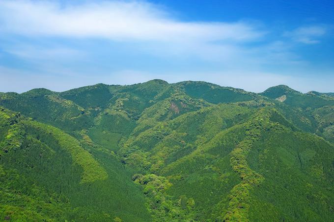 木々の命みなぎる若草色の山の背景