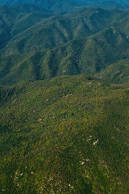 無数の木がある緑の山脈の背景