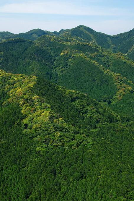 緑に萌える春の山地