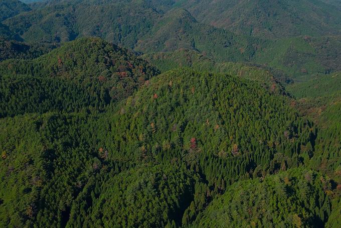 緑の森の中にある紅葉した木の風景(山 フリーの画像)