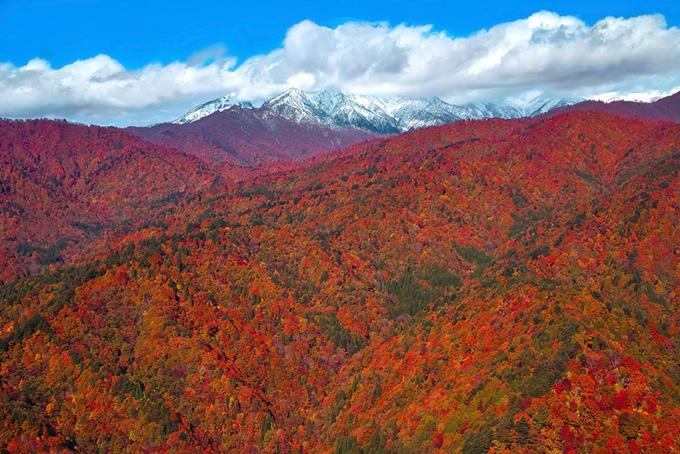 紅葉の向こうの雪積もる山頂の写真