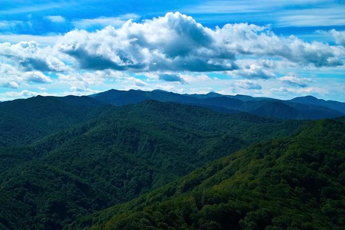 生い茂った木々が覆う山の背景