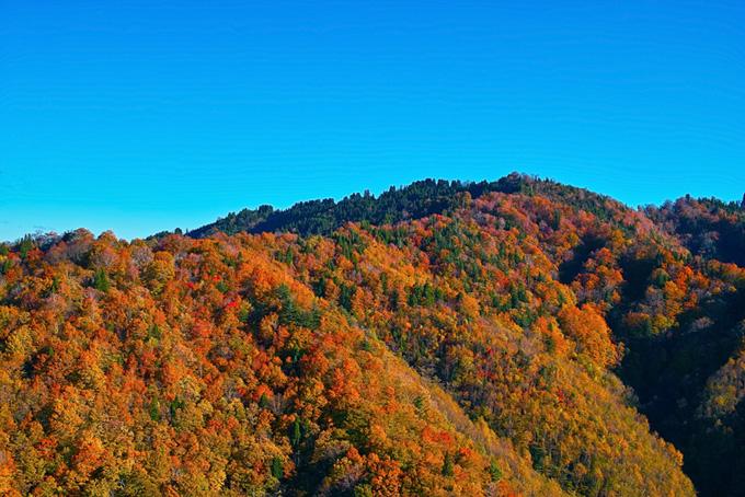 山・山林の写真