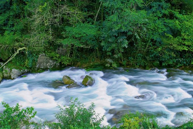 美しい緑の木々の中を流れる清流の画像