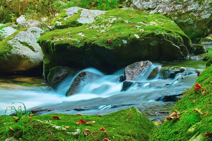 渓流にある苔のついた岩の上に赤い葉が落ちる
