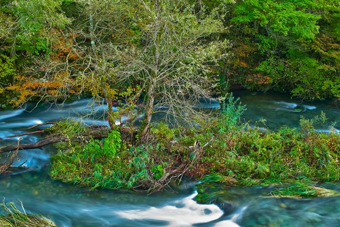 色鮮やかな木々に囲まれた清流の画像