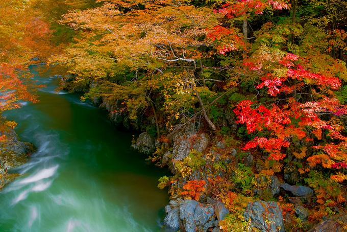 紅葉の中を流れる緑の川の風景画像(紅葉 風景のフリー画像)