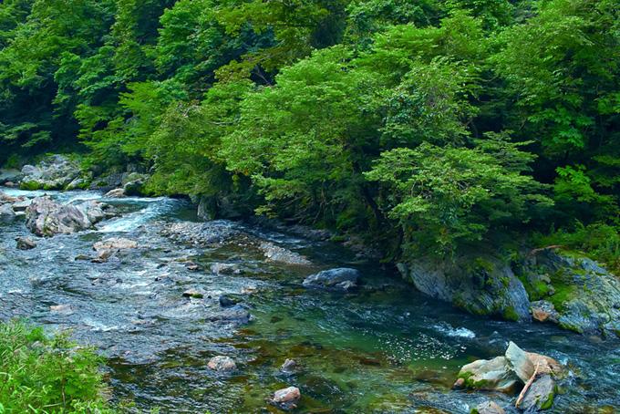 木が生い茂る山の急流