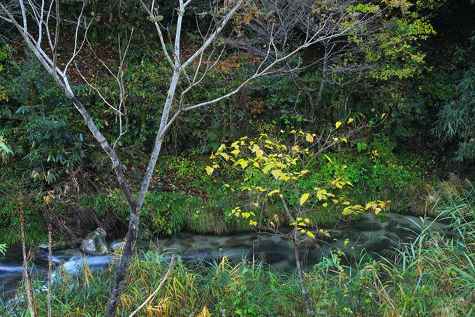 山奥に流れる清水の小川