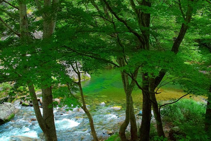 緑の木立の下を流れる清流