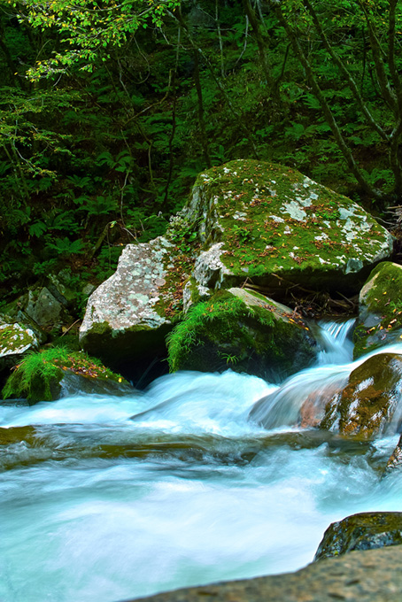 渓流(渓流 フリーの画像)