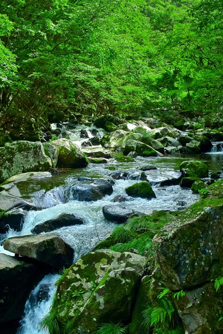 川と木(渓流 フリーの画像)