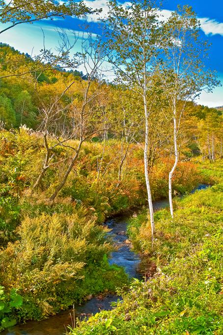 秋の野山に流れる小川