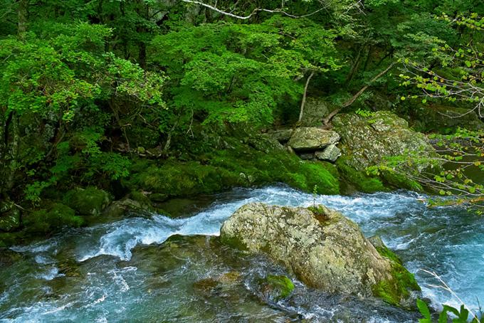 川と自然の写真