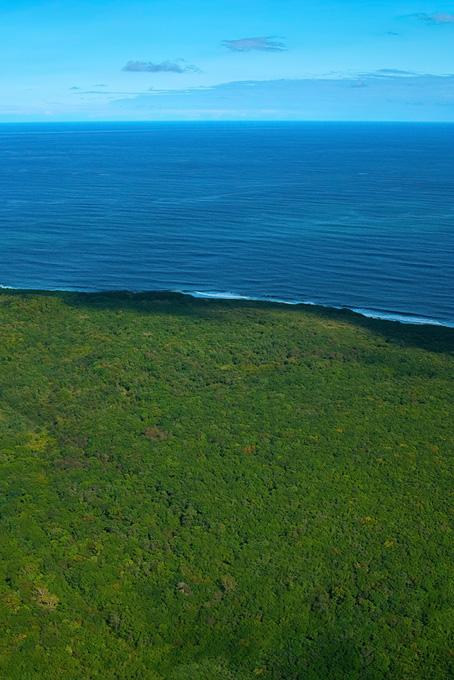 森の向こうに広がる大海