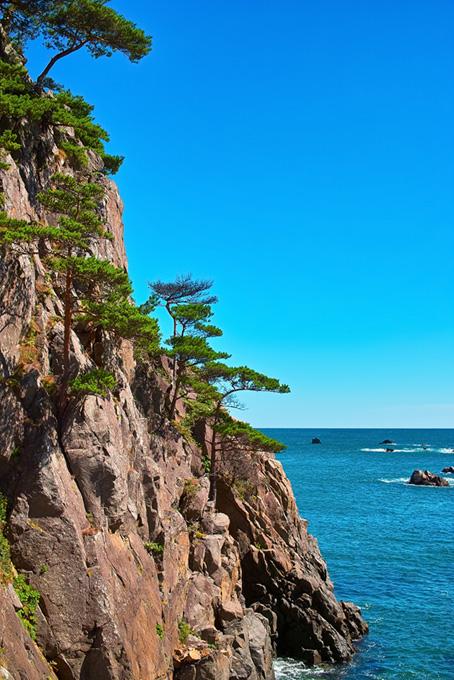 松の生えた崖と海