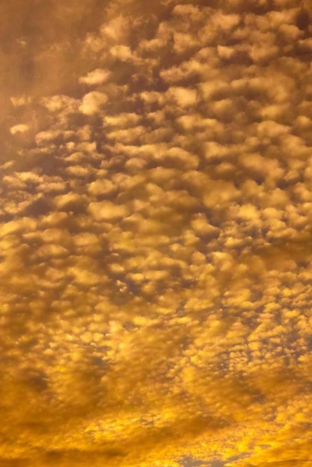 一面のうろこ雲が夕焼けに染む
